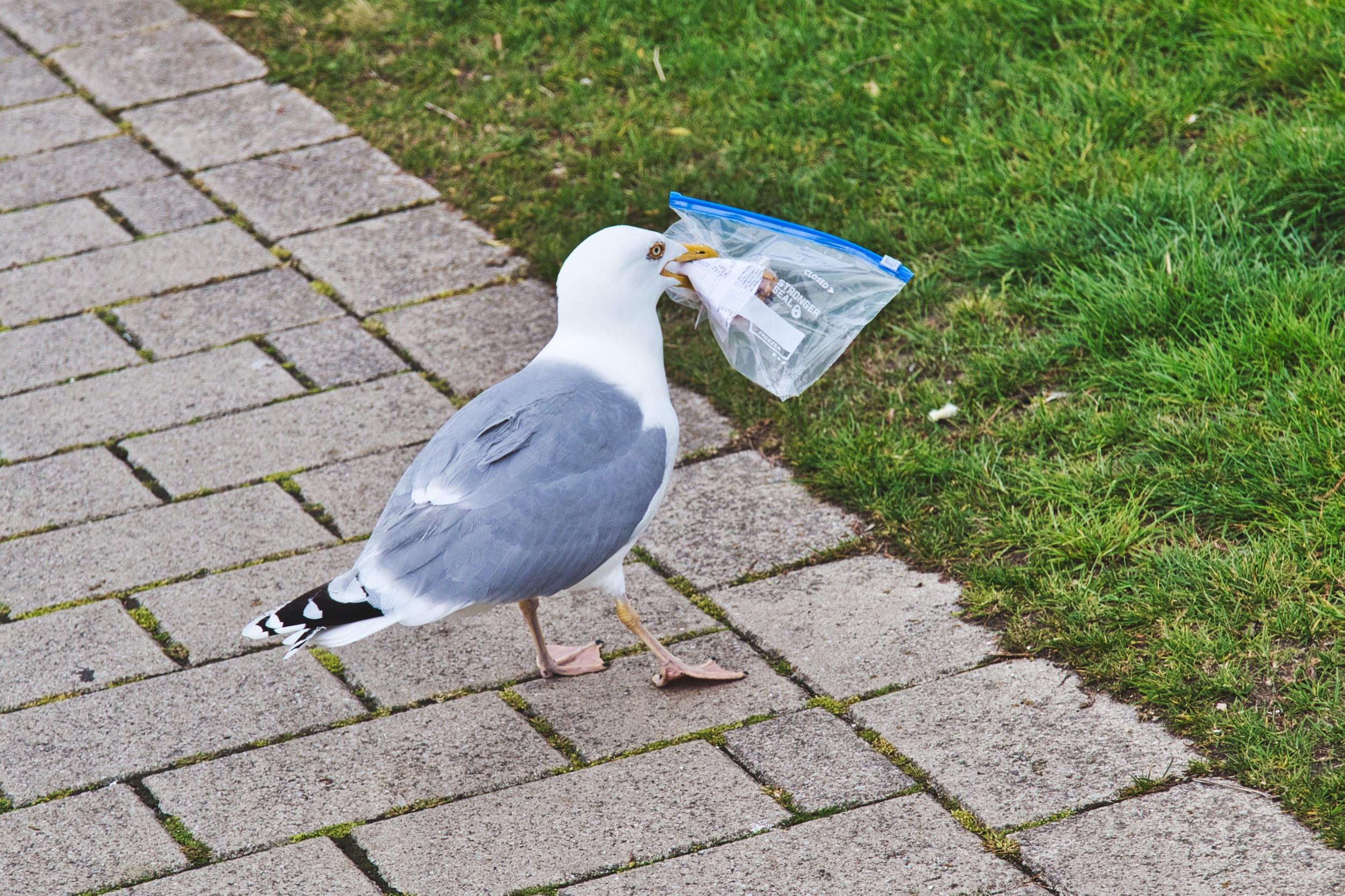 Nachhaltigkeit auf Reisen - Justmarius.de deine Reise und Fotoblog